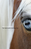 The Horse with One Blue Eye